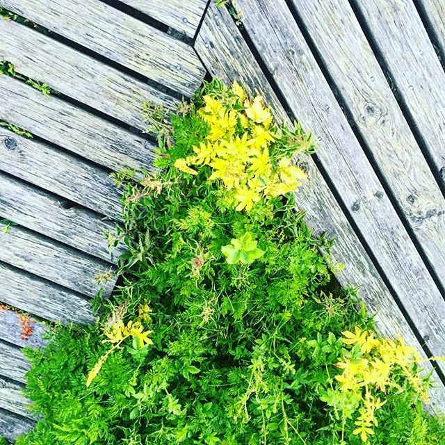 Green deck  #greenery #deck #flowers #harbour #nature #island #soundshade