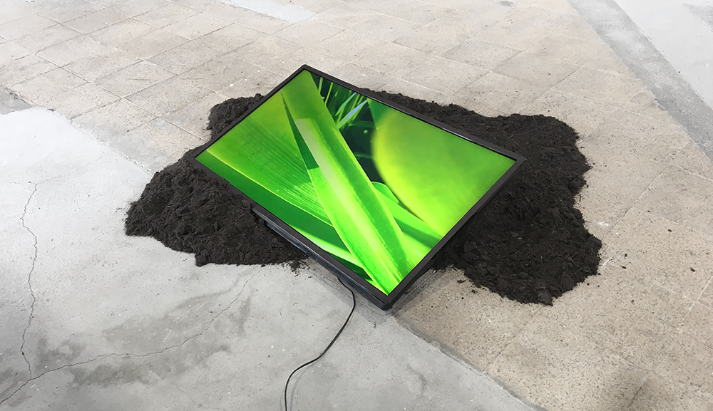 Meanwhile, At Home  Installation View At Quartier General, Switzerland., Curated By Corina Weiss. 2017, LCD, Screens, Soil, Plants, Cargo Net, Rubber Sandals
