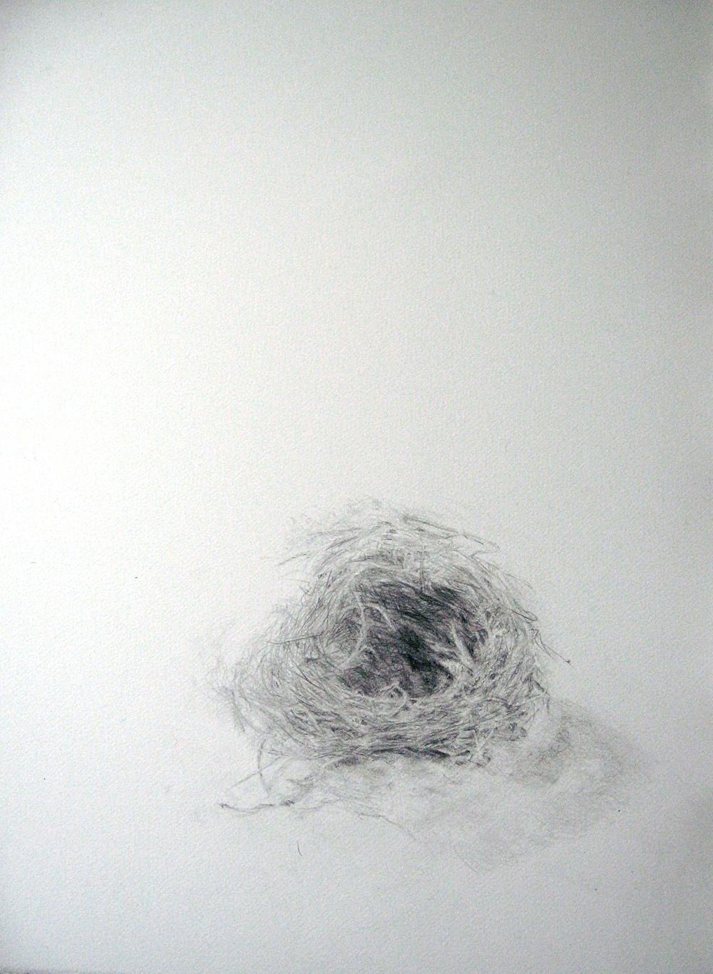 birdnest, (blackbird)