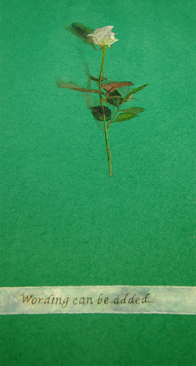 trompe l'oeil, single rose