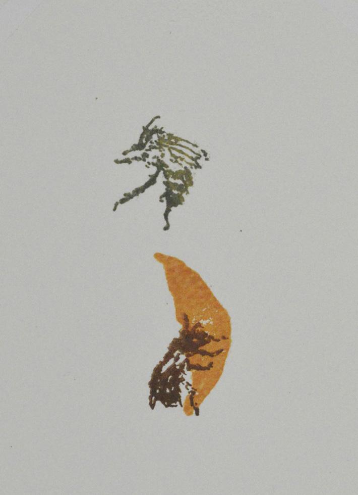 Anthorphora furcata, fork tailed flower bees