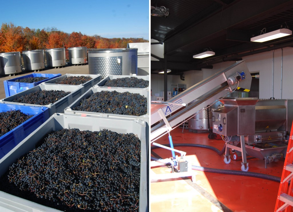 wine making process at 2 lads in traverse city michigan