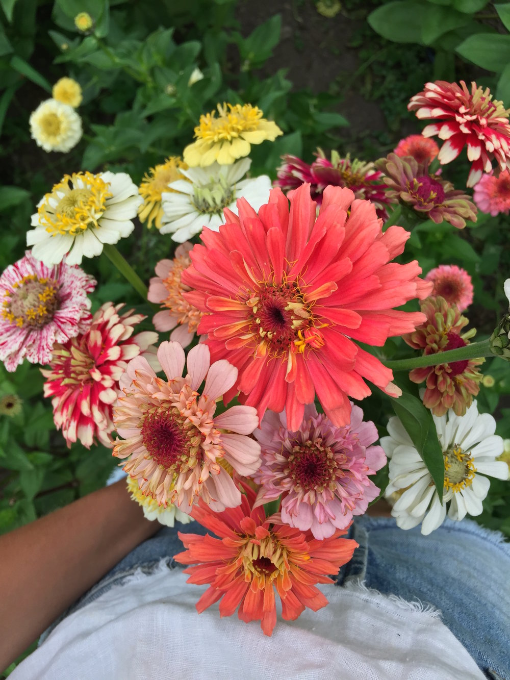zinnias above copy 2.jpg