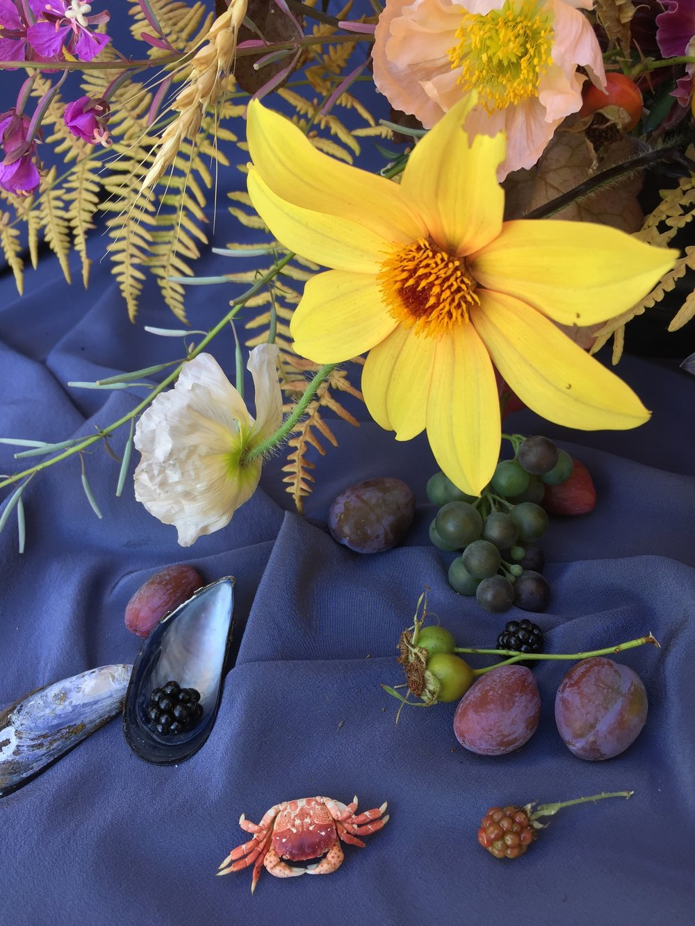 Fruits and Flowers of the Sea