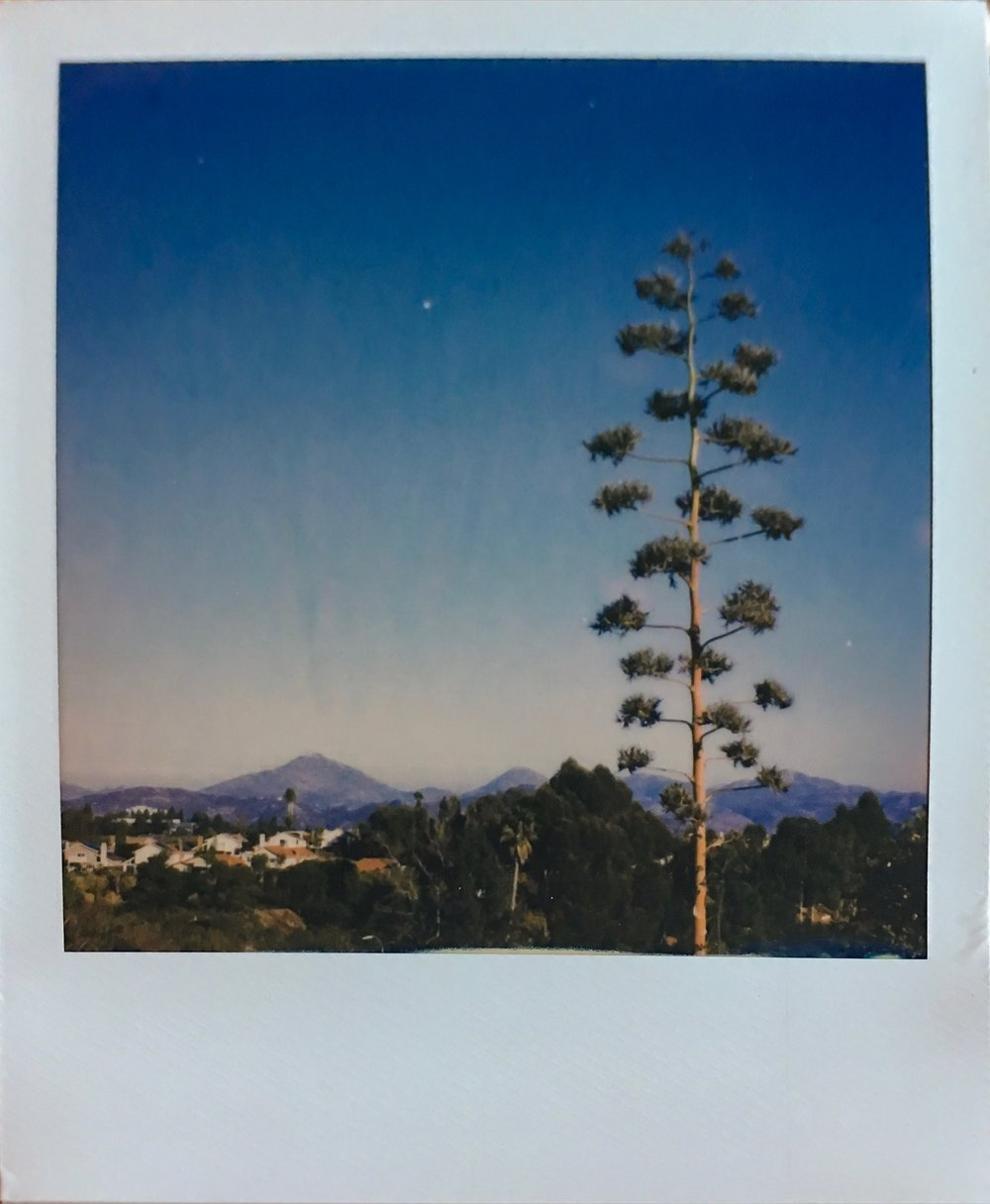Wandered around Black Mountain park with a couple packs of new Polaroid Originals instant film.
