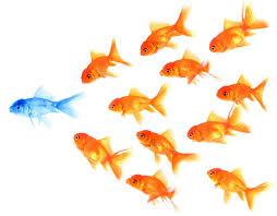 goldfish blue.jpg