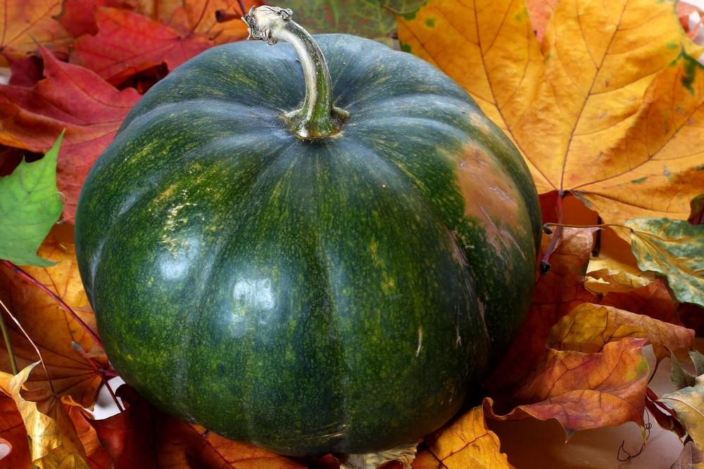 """"""" green pumpkin """" by  Torange.biz  is licensed under  CC-BY 4.0 ."""