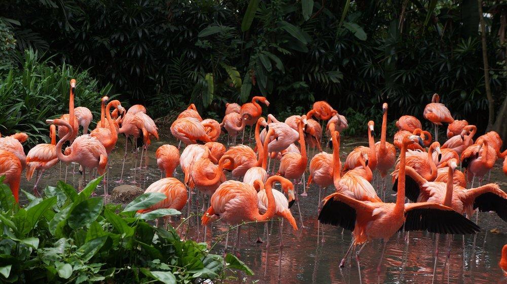 """ Flamingo, Park, Birds "" by  Taras Kretyuk  is  public domain ."