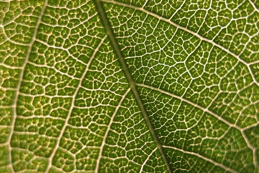 """ Leaf, macro, micro, green, nature "" by  Vadim Gromov  is  Public Domain ."