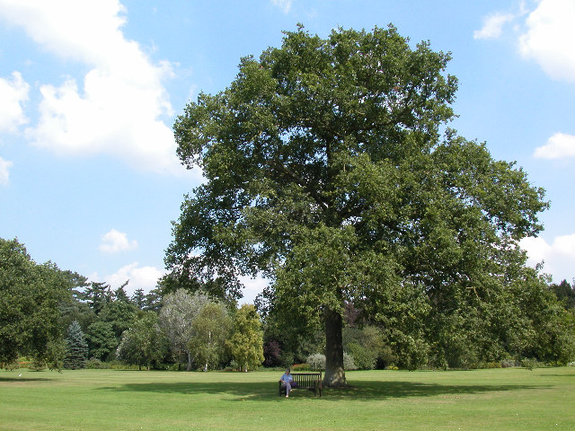 """"""" Queen Victoria's Oak Tree, Sandringham """" by  Andrew Hugget  is LICENSED under  CC BY-SA 2.0 ."""