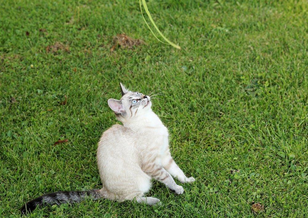 """ Cat, garden, pet, domestic "" by  Andreas Lischka  is  Public Domain."