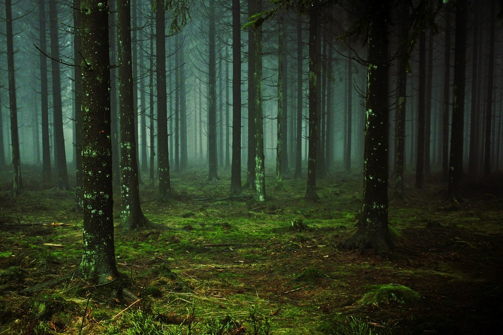 """ Forest, fog, tree, trunks "" by  Anja Osenberg  is  Public Domain ."