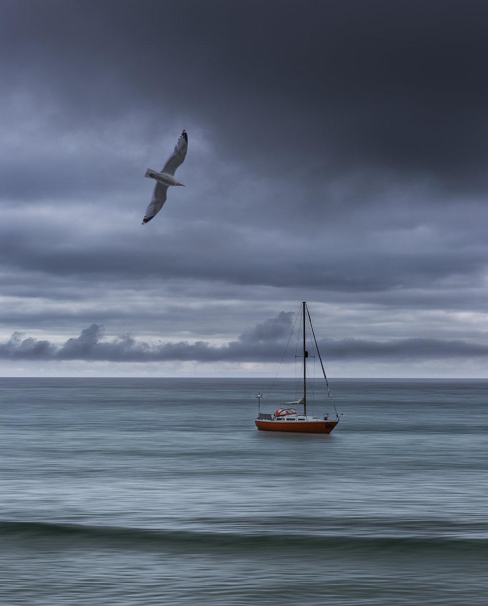 Yacht & Gull.jpg