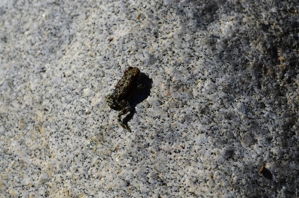 Fauna y roca