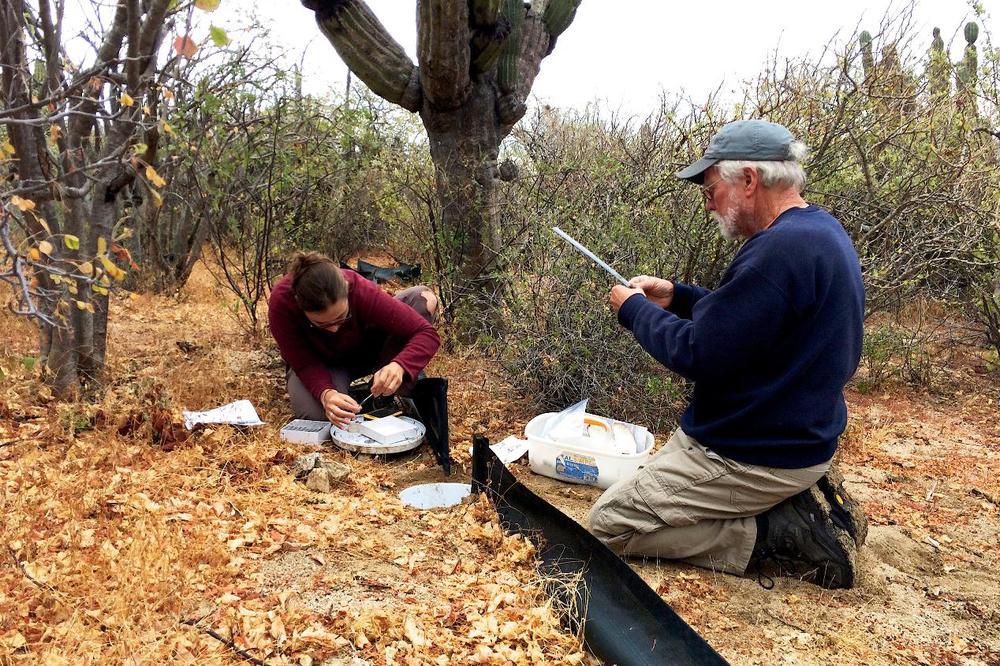 El equipo de herpetología en acción en Rancho Cacachilas, BCS
