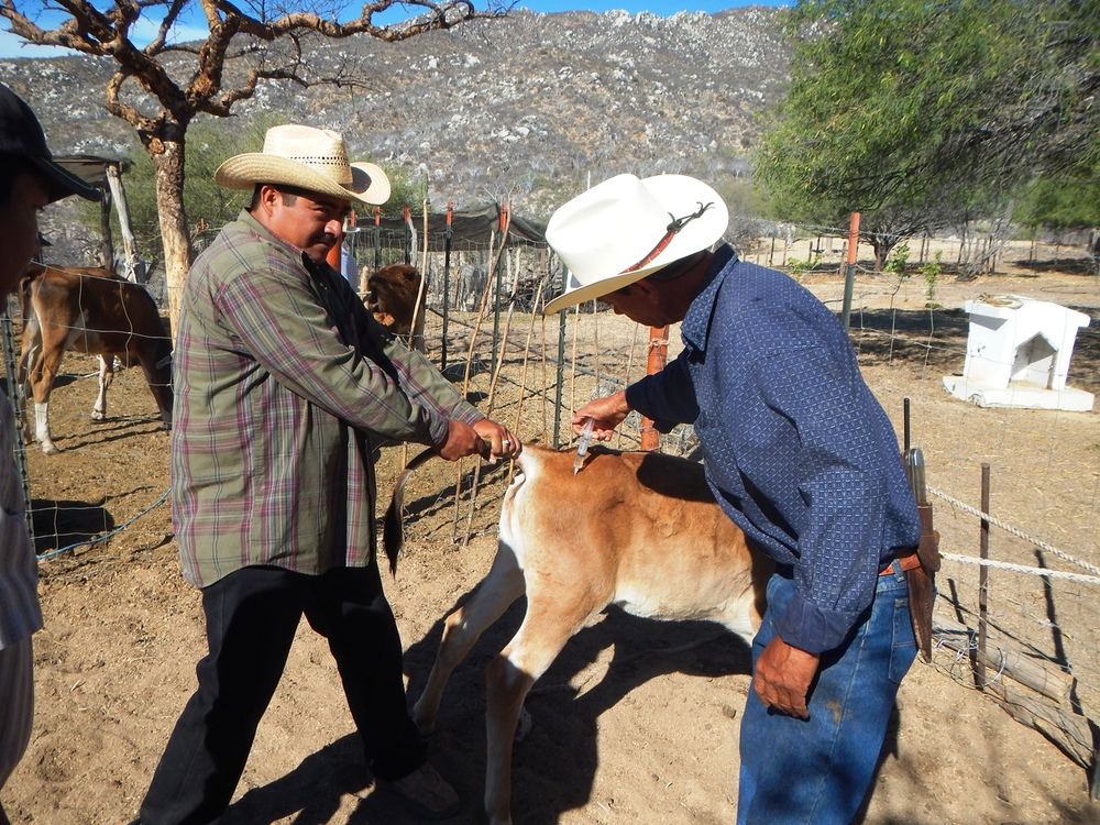 planning-cattle-grazing-ranch-bcs