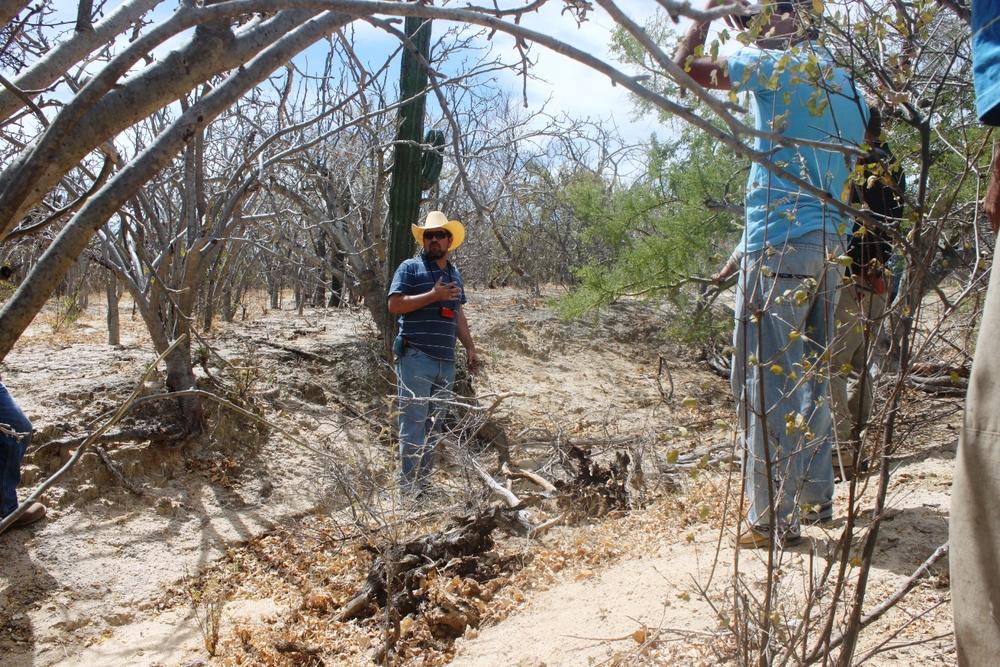 soil-restoration-rancho-cacachilas-la-paz-bcs