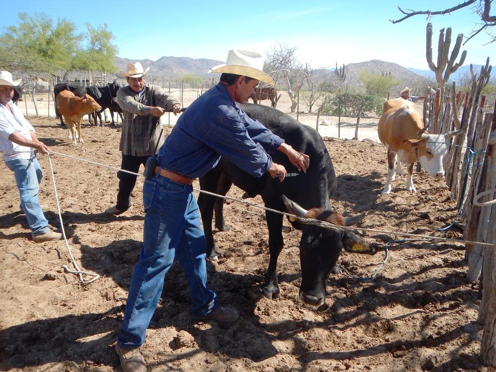 Los vaqueros de Rancho Cacachilas