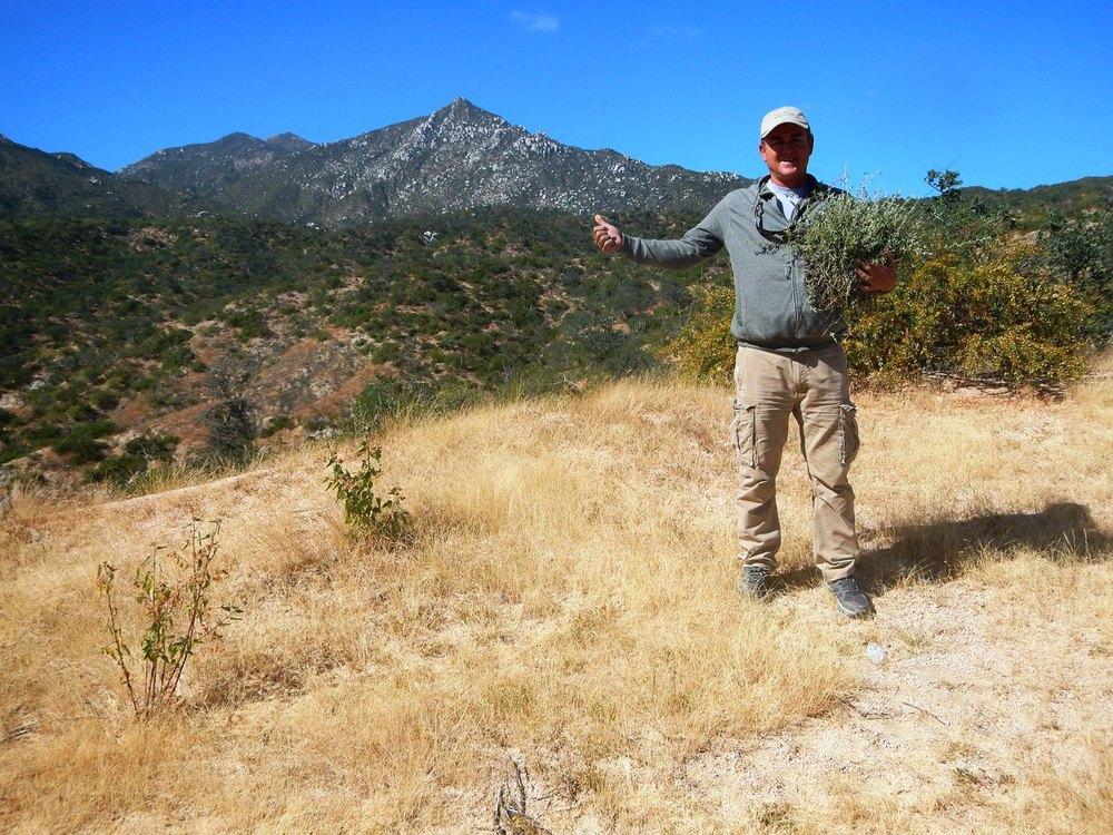 El experto acreditadoIvan Aguirre de Savory Institute y Rancho La Inmaculada, en el monitoreo de pastos y plantas (Damiana en su mano) de Rancho Cacachilas, La Paz.