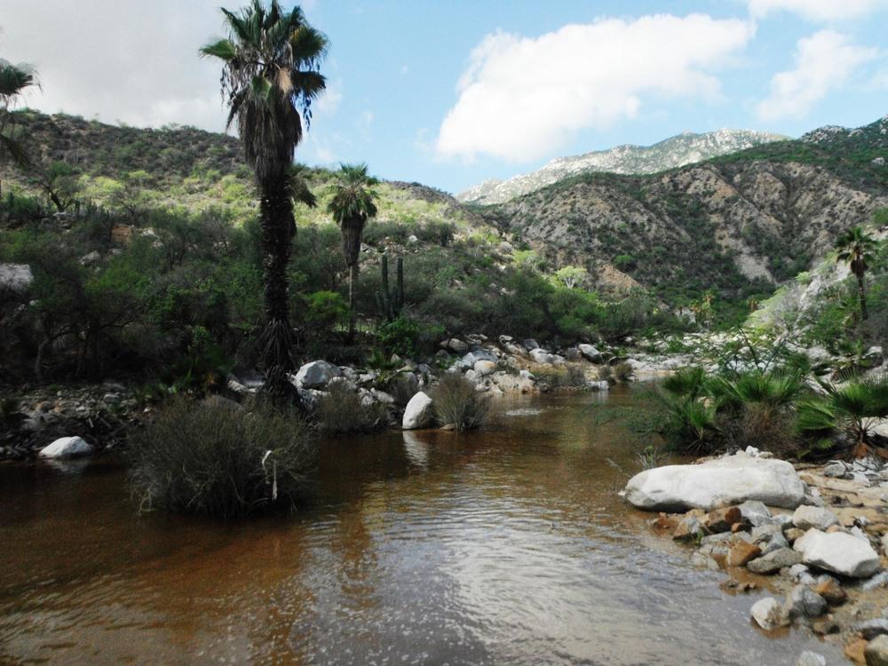las-canoas-oasis-caminata-campismo-rancho-cacachilas-baja-sur-mexico.JPG