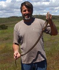reptiles-amphibians-baja-mexico