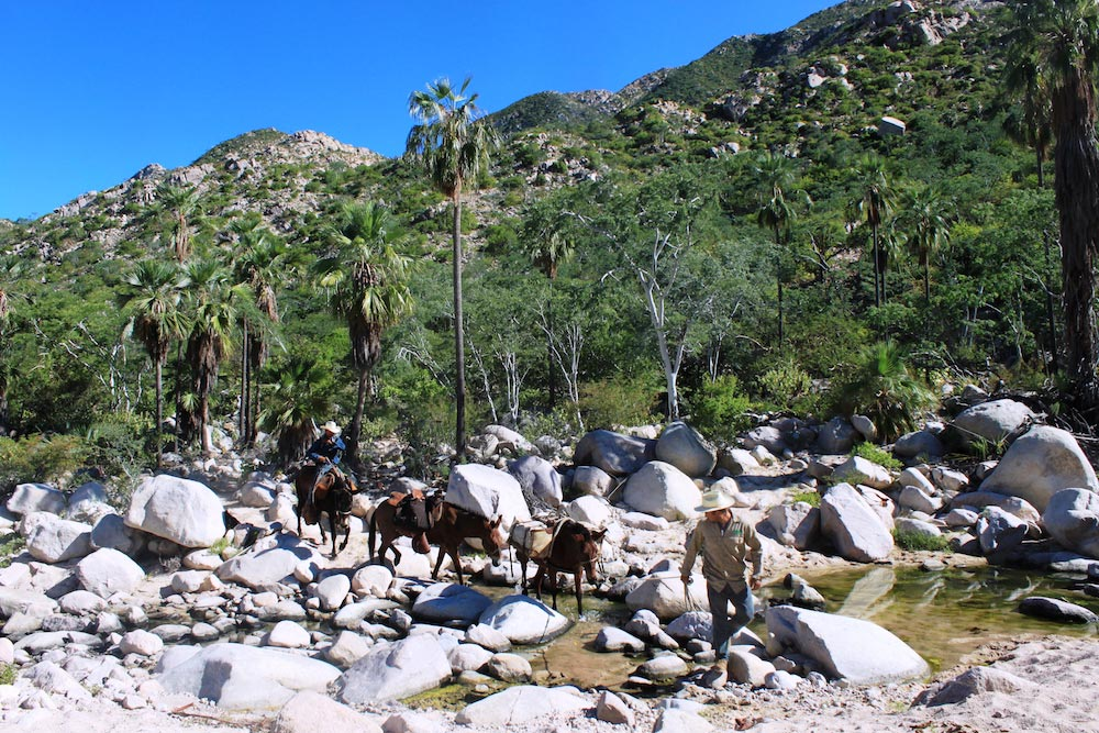 Trekking - Mules - Trails