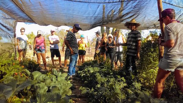 garden-classes-la-paz-mexico.jpg