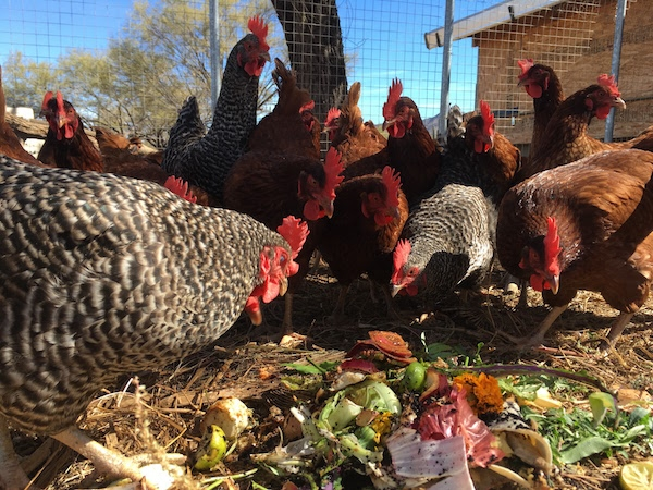 Gardening & Animal Husbandry Integration