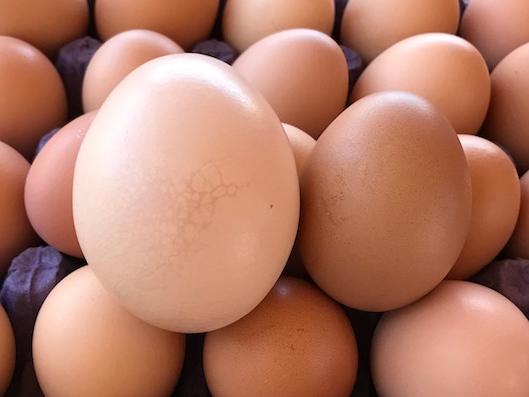 Organic Eggs — Ranch in El Sargento