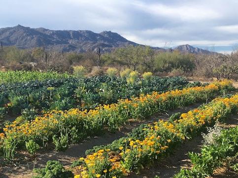 Organic Gardening Mexico