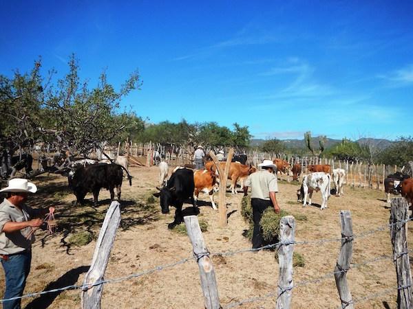 Livestock Management -
