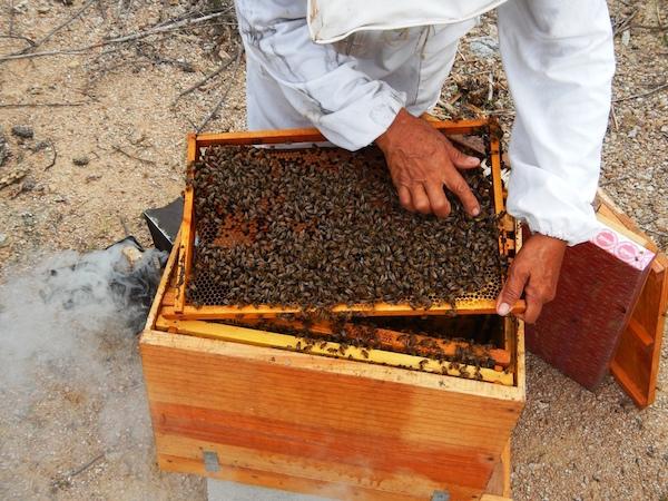 Beekeeping -