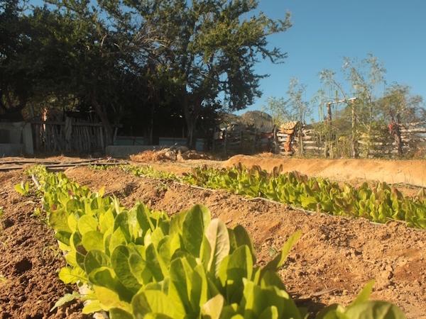 Gardening -