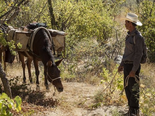 mula-bar-ranchos-la-paz.jpg
