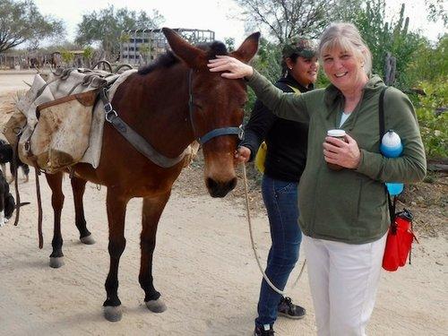 Excursiones a Caballo, Baja