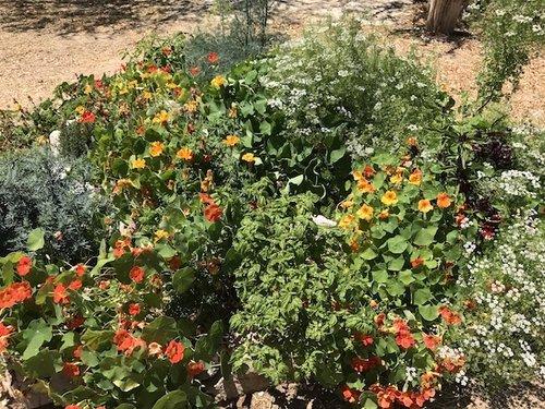 Huertos Orgánicos de Permacultura