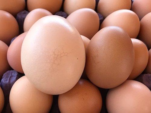 Producción de Huevos Orgánicos