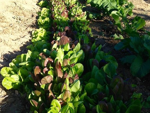 Cultivos Orgánicos Saludables