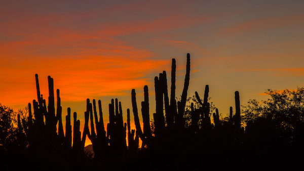 bosque-cardon-bcs-mexico.jpg
