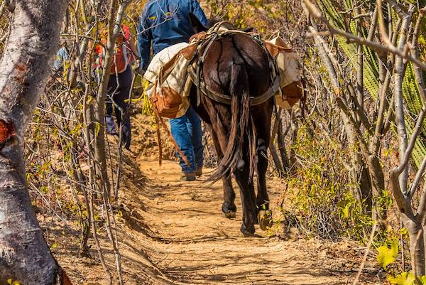 Trail Network