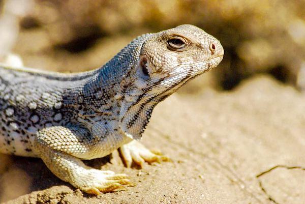 Fauna — Reptiles — Anfibios