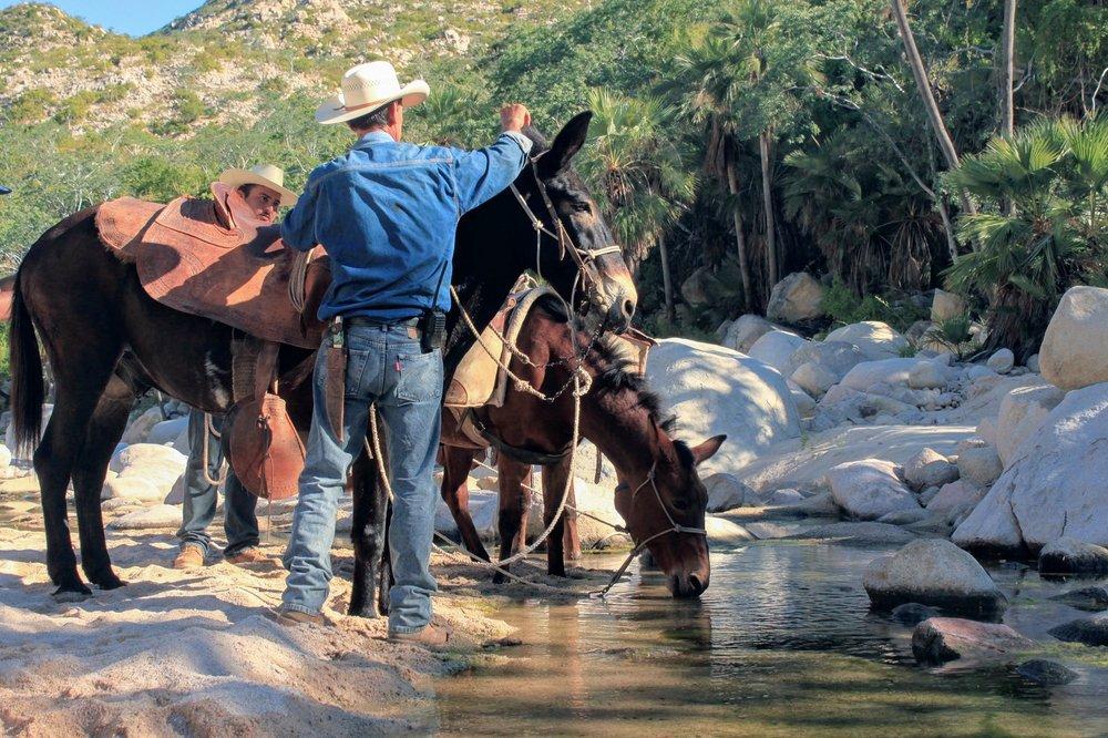 vaquero-cowboy-mule-hiking-long-trail-barrito-arroyo-ecotourism-rancho-cacachilas-la-paz-baja-sur-mexico.jpg