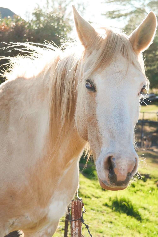 Stock horse photo.jpeg