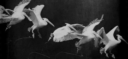 An article on    Étienne-Jules Marey,   the pioneer of chronophotography or motion photography.
