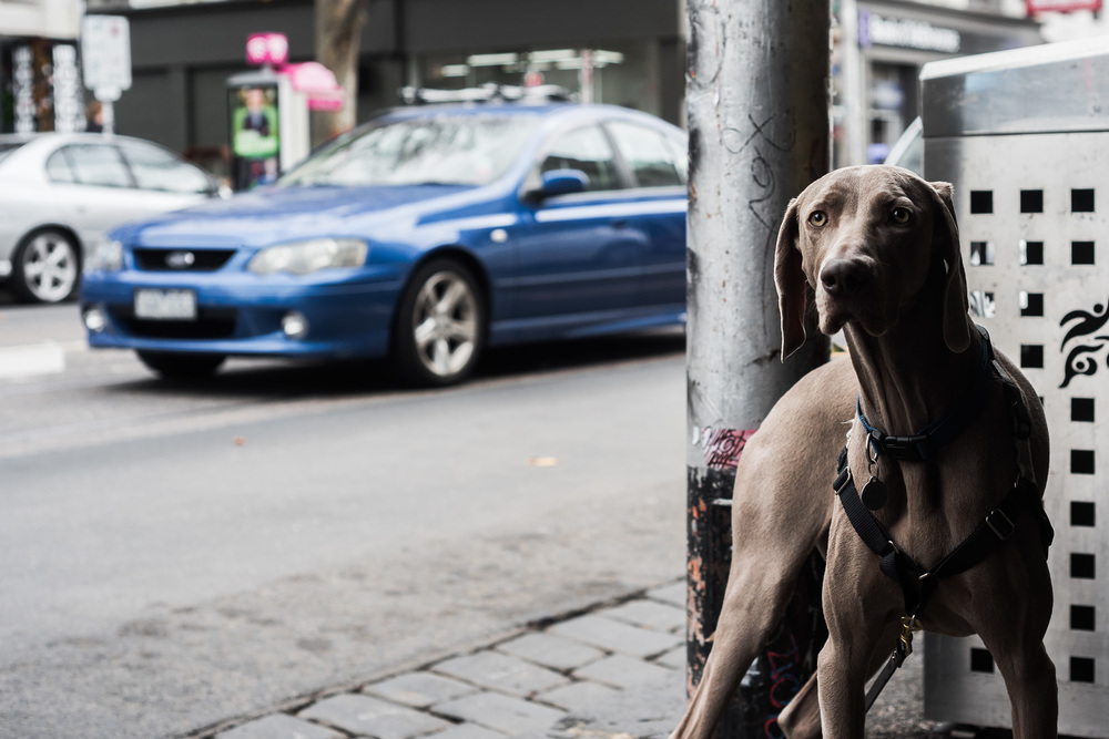 Dogs of Collingwood. Smith Street, Melbourne © Daniel Purvis 2016