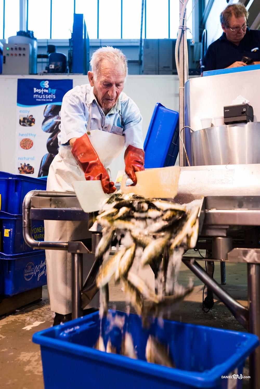 Samtassi Seafood - Daniel PurvisDSC_1997-Edit.jpg