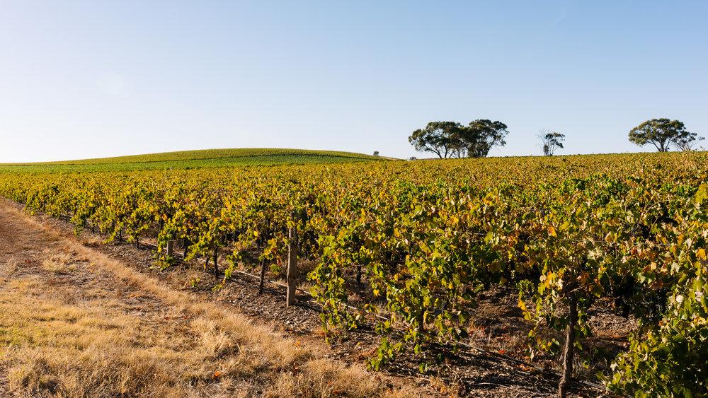 Whistler Wines Vintage 2018 - Daniel Purvis - _DSC4878.jpg