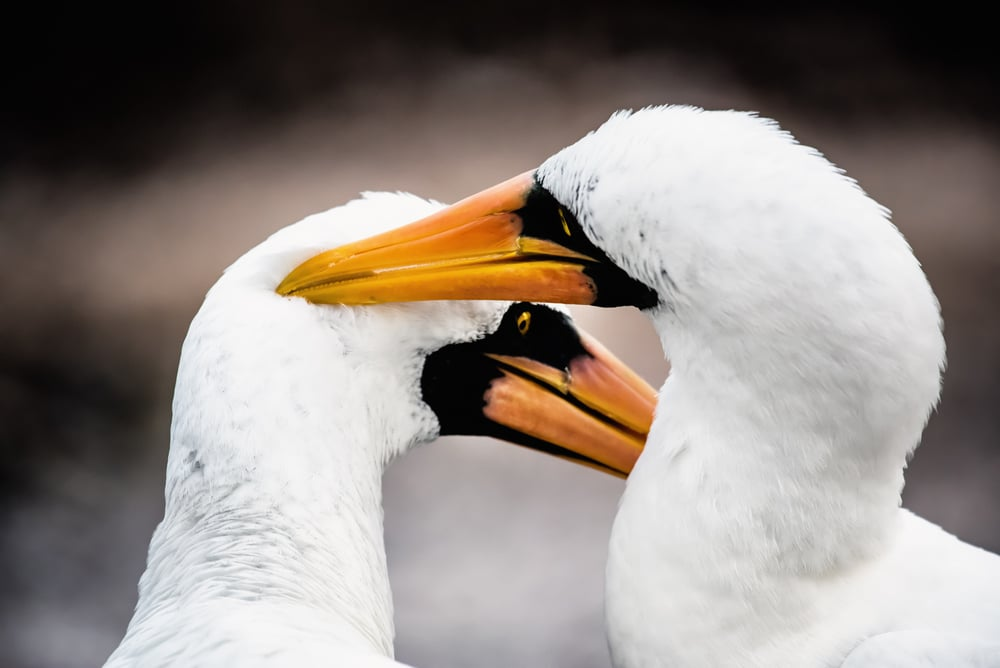 A couple of lovebirds