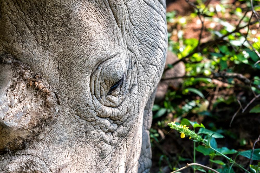 rhino-uganda.jpg