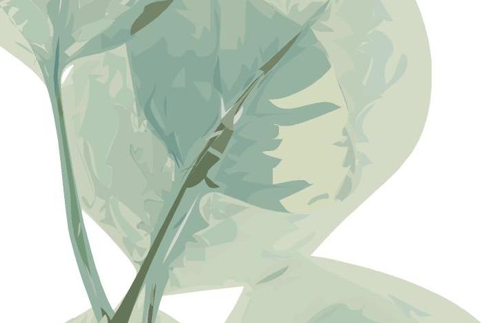 detalle hojas.jpg